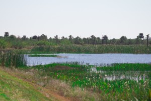 lake-in-the-woods