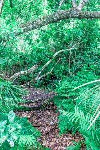long-term-survival-in-the-woods
