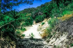 path-through-woods