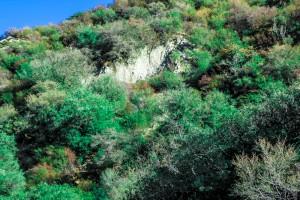 wilderness-survival-location