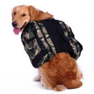 dog-prepper