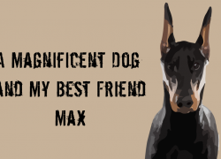 A Magnificent Dog and My Best Friend – Max