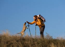 Will You Choose to Take Your Dog When Your Survival is at Stake?